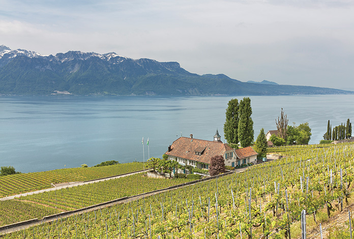A view of a swiss vineyard overlooking the water