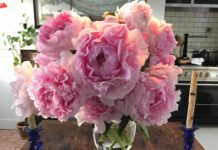 A vase of peonies from Christopher Spitzmiller's farm.
