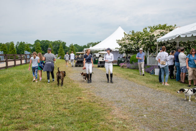 Image from Ox Ridge Charity Horse Show